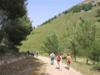 המלצה - טיול בהר מירון