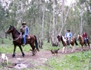 חוות דובי - טיולי סוסים