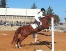 חוות סוסים קיבוץ מלכיה