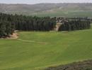 מועצה אזורית בני שמעון - יער להב