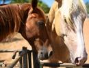 חוות גזית - טיולי סוסים