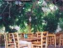 המסעדה הלבנונית - אבו גוש