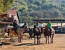 טיולי סוסים וטומקארים במרום גולן