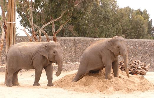 חי פארק- פילים