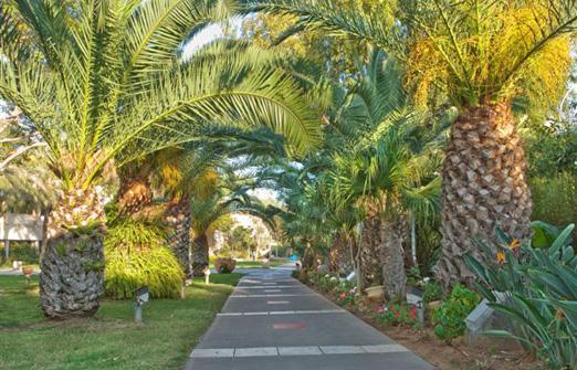 מלון שפיים - חזית המלון מוקפת צמחיה