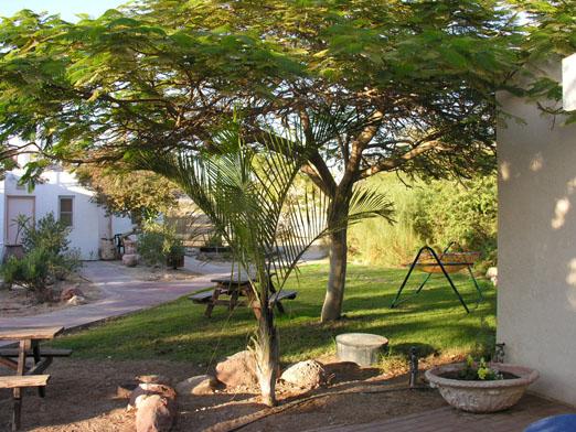 צל תמרים חדרי אירוח - קיבוץ יהל - החצר הירוקה