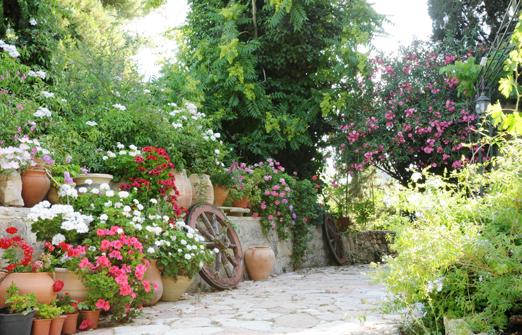 החצר - בחורש הטבעי