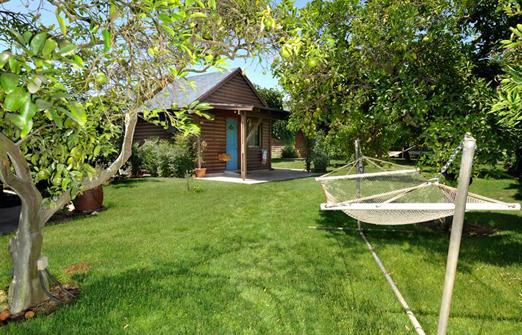 אשכולית בקתות עץ בפרדס - ערסל בחצר