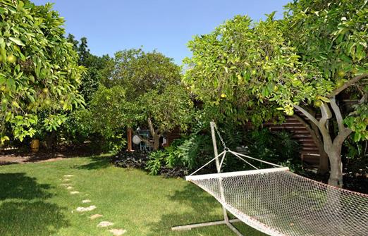 אשכולית בקתות עץ בפרדס - חצר הצימרים המוריקה