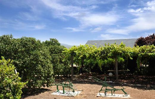 אשכולית בקתות עץ בפרדס - חצר מוריקה