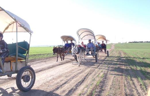 אטרקציות חוות פיליפ - הנה באות הכרכרות