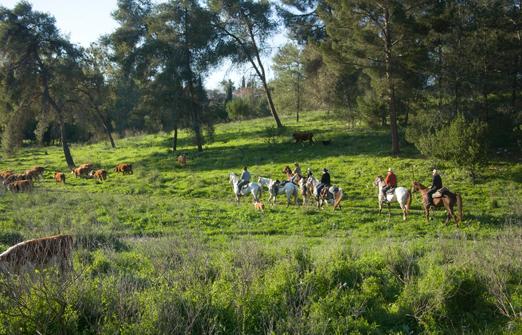 חוות דובי - רכיבה על סוסים בגבעות מנשה