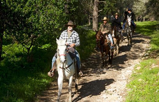 חוות דובי - טיולי סוסים מודרכים