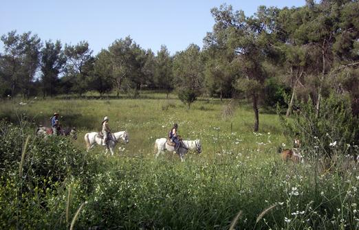 חוות דובי - טיולי סוסים בטבע