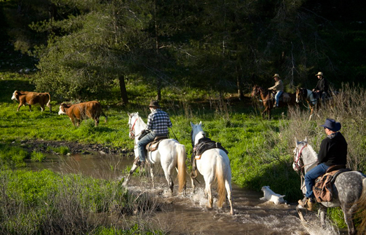 חוות דובי - טיול סוסים בגבעות הירוקות של רמות מנשה
