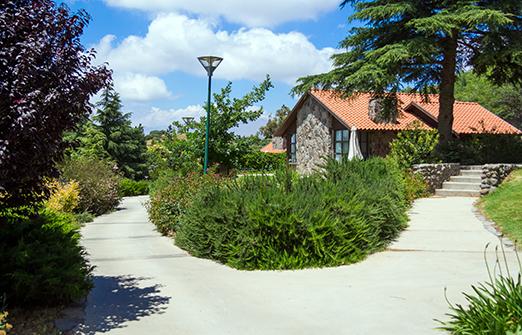 תיירות מרום גולן- צימרים - החצר